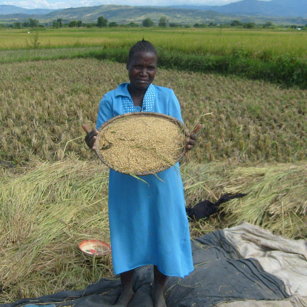 Amora Kilombero Rice 2kg 5